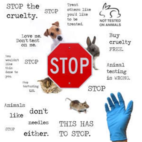 Animal Testing Shouldnt Be Banned Essay - Graduateway