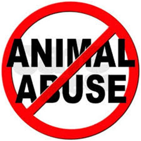 Essay on animal experimentation should be banned